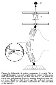 前十字靭帯の負荷の実験