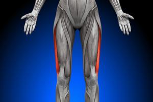 外側広筋の解剖図