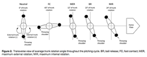 投球動作のフェーズと体幹部の回旋