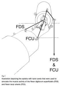 献体による肘の靭帯の負荷の算定