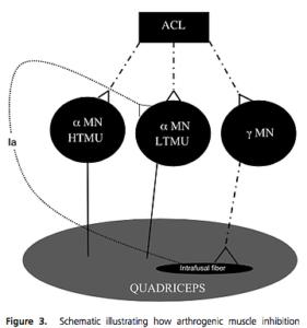 神経と筋肉の関連性