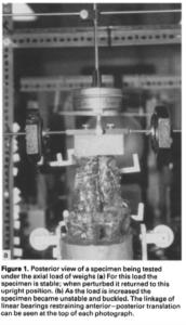脊柱の負荷の献体による実験