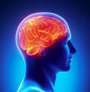 脳への影響