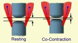 膝の筋肉の力による圧迫の負荷
