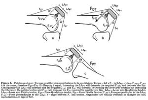 膝蓋骨と物理的な優位性