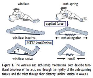 足の指の可動域によるアーチの変化