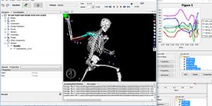 骨格筋モデルによる投球動作解析