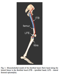 骨格筋モデルによる腸脛靭帯の負荷の算定
