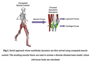 骨格筋モデルによる軟骨の負荷の算定