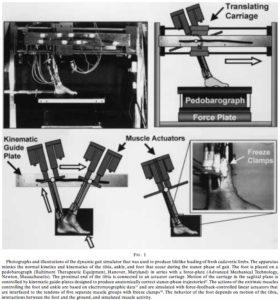 中足骨への負荷の測定
