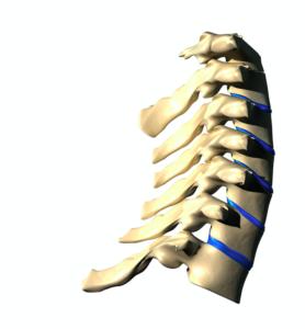 首の椎間板