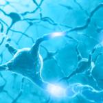 神経伝達ニューロン