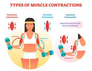 筋肉の収縮様式