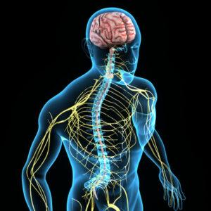 脳神経と脊髄